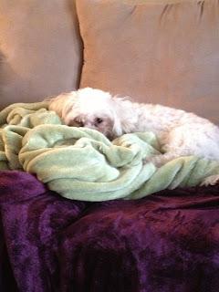 My Sleeping Marathon…and 2 New Freebies!